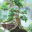 Bonsai Tree and mini landscaping - Stock Photo