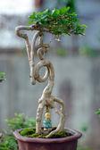 Bonsai Tree and mini landscaping — Stockfoto
