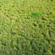 Lawn of a green grass — Stock Photo