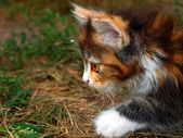 Hunting kitten close up — Stock Photo
