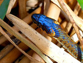 Head of Snake against the dried up leaves of a cane — Stock Photo