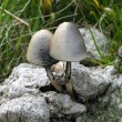 Mushrooms — Stock fotografie