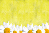 Yellow card with daisies — Stock Photo