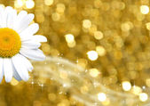 Color background gold and daisy — Stock Photo