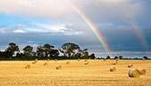 Sklizené pole po dešti — Stock fotografie