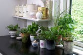 Herbs in the kitchen — Stock Photo