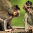 Childs of monkeys — Stock Photo