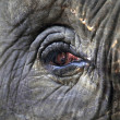 Eye of elephant — Stock Photo #6161907
