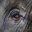 Eye of the elephant — Stock Photo