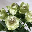 Greenish roses — Stock Photo