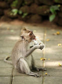 Dítě opic — Stock fotografie