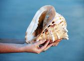 巻き貝の殻 — ストック写真