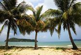 Beach Langkawi — Stock Photo