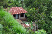 House in jungle — Stock Photo