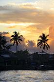 Palm on sunset — Stock Photo