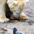Bear and pigeon — Stock Photo #6173672