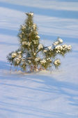 Fur-tree in snow — Stock Photo