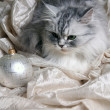Christmas balls and cat — Stock Photo