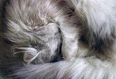 Sleeping kitten — Stock fotografie