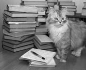 Heap of books and a grey cat — Stock Photo