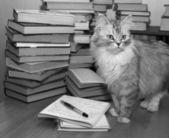 Bibliophile — Stock Photo