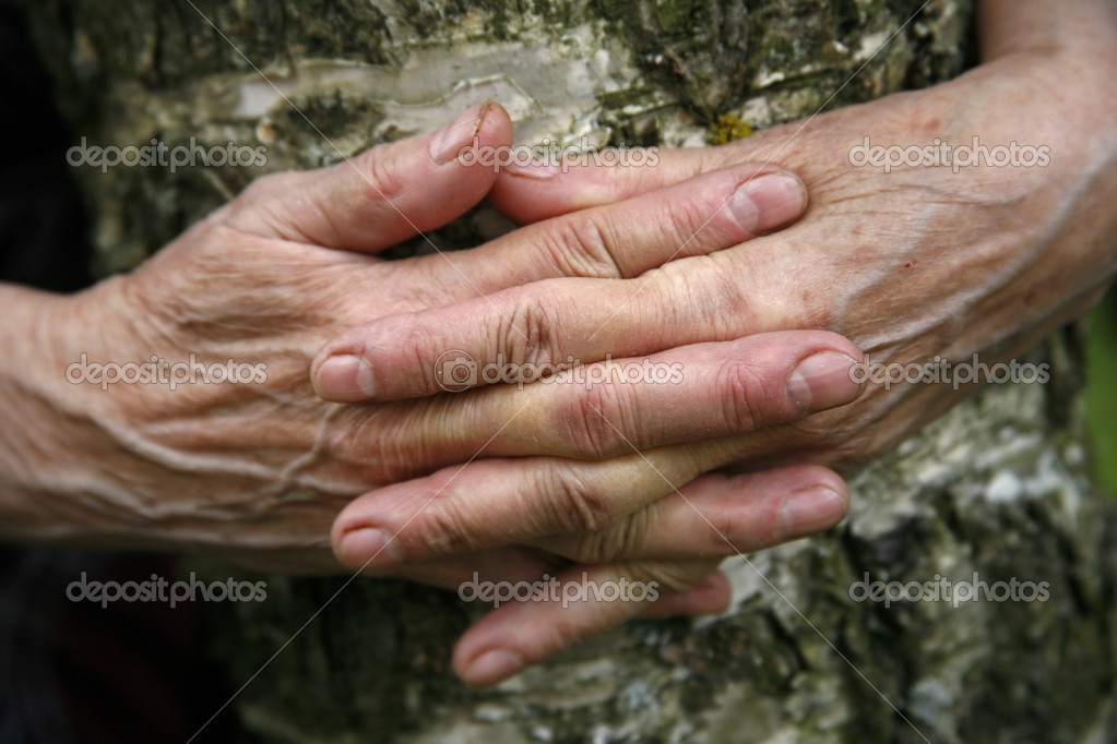 Hands of the elderly woman embracing a birch  Stock Photo #6185569