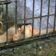 Monkey in a cage — Stock Photo #6205321