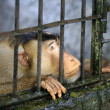 Stock Photo: Monkey in cage