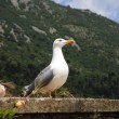 Seagull — Stock Photo #6211129