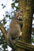 一棵树上的小猫 — 图库照片
