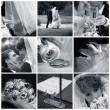 Collage of nine wedding photos — Stock Photo #6224690