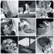 collage de photos de mariage neuf — Photo #6224690