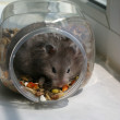 Hamster in bank — Stock Photo