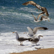 Seagulls — Stock Photo #6231167