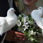 Wedding pigeons — Stock Photo