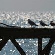 Seagull on an old pier - Stock Photo