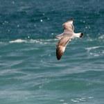 Seagull — Stock Photo #6231340