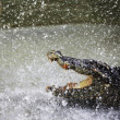Crocodile in sparks - Stock Photo