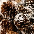 Pine cones — Stock Photo #6234326