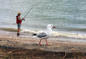 Fisherman and seagull — Stock Photo