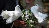 Palomas de boda — Foto de Stock