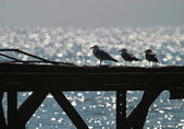 Seagull on an old pier — Stock Photo
