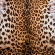 Skin of the leopard — Stock Photo #6248715