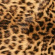 Stock Photo: Skin of the leopard