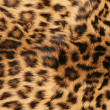 Skin of the leopard - Stock Photo