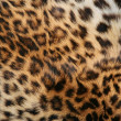 Skin of the leopard — Stock Photo #6248747