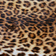 Skin of the leopard — Stock Photo #6248750