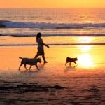 Walk on sunset — Stock Photo #6264445
