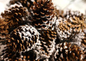 Pine cones — Stock Photo