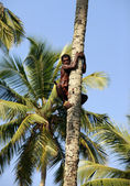 The man on a palm tree — Stock Photo
